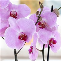 orchidee-blanche-200-2946.jpg