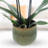 orchidee-blanche-200-2947.jpg