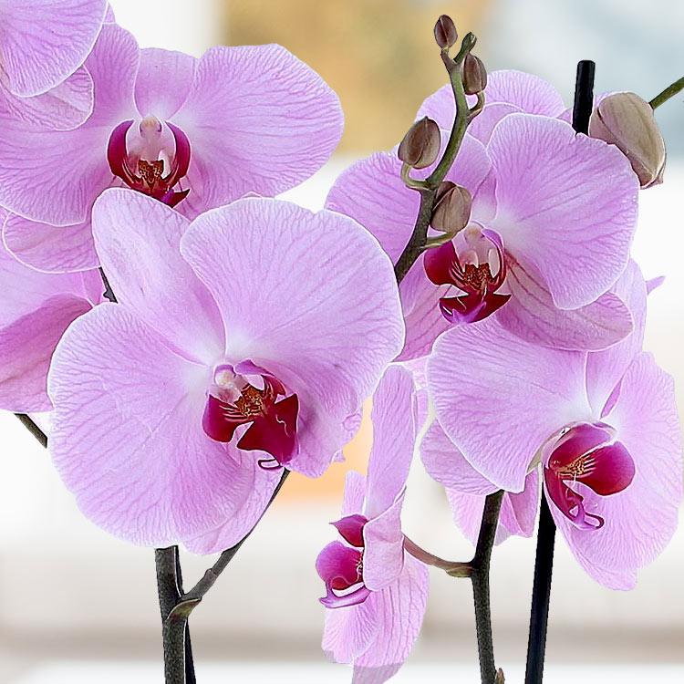 orchidee-blanche-750-2946.jpg