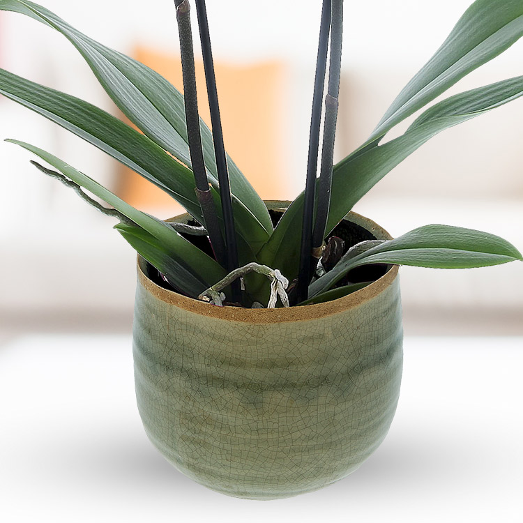 orchidee-blanche-750-2947.jpg
