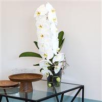orchidee-formidablo-200-5284.jpg
