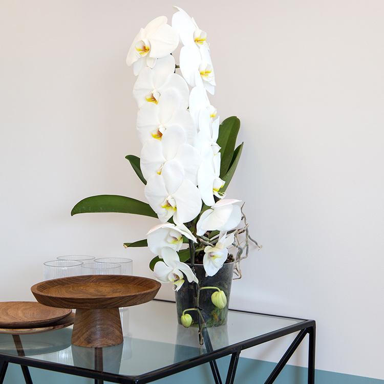 orchidee-formidablo-et-son-cache-pot-750-5285.jpg