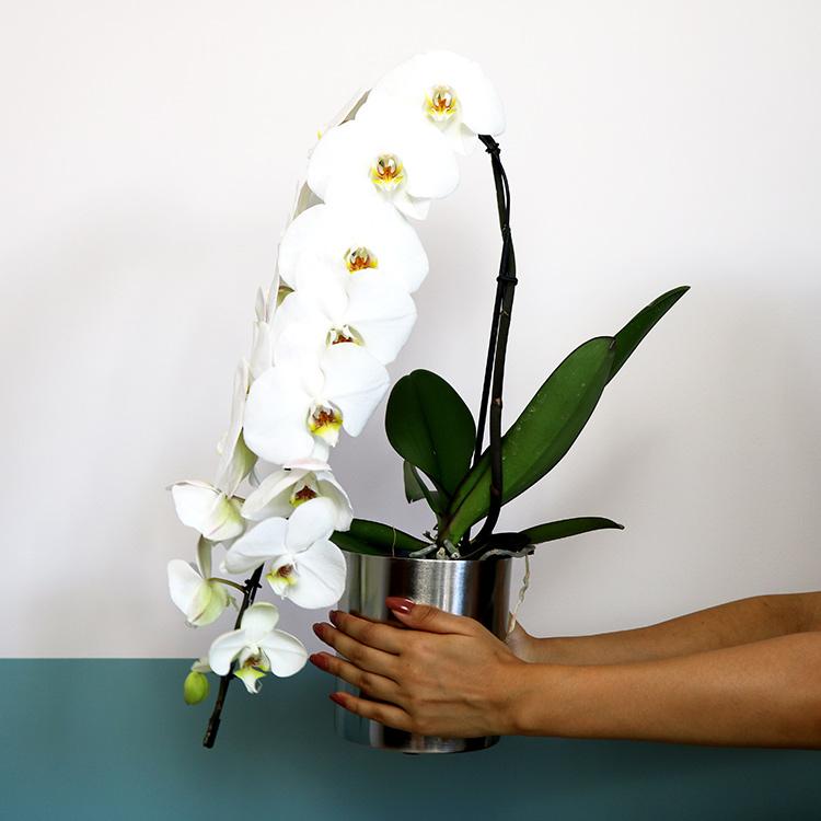 orchidee-formidablo-et-son-cache-pot-750-5401.jpg