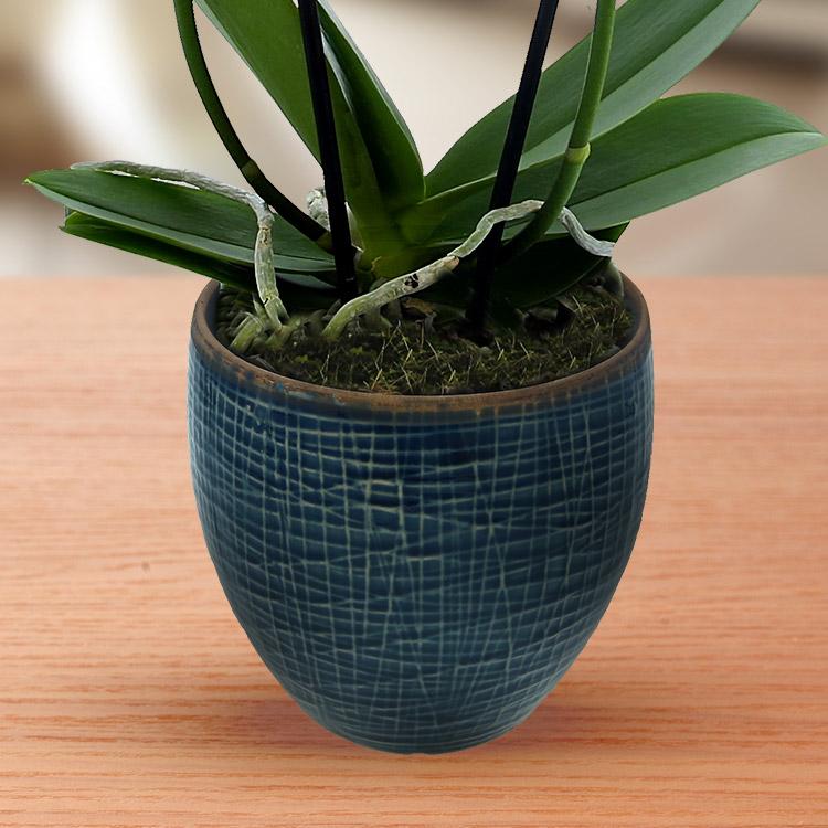 orchidee-fuchsia-750-2943.jpg