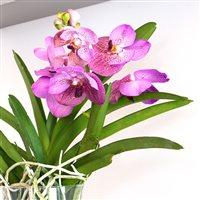 orchidee-vanda-lhassa-200-5272.jpg