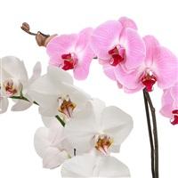 orchidees-200-1577.jpg