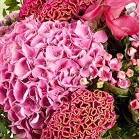 pink-cocktail-xxl-et-son-rose-lafage-200-5012.jpg