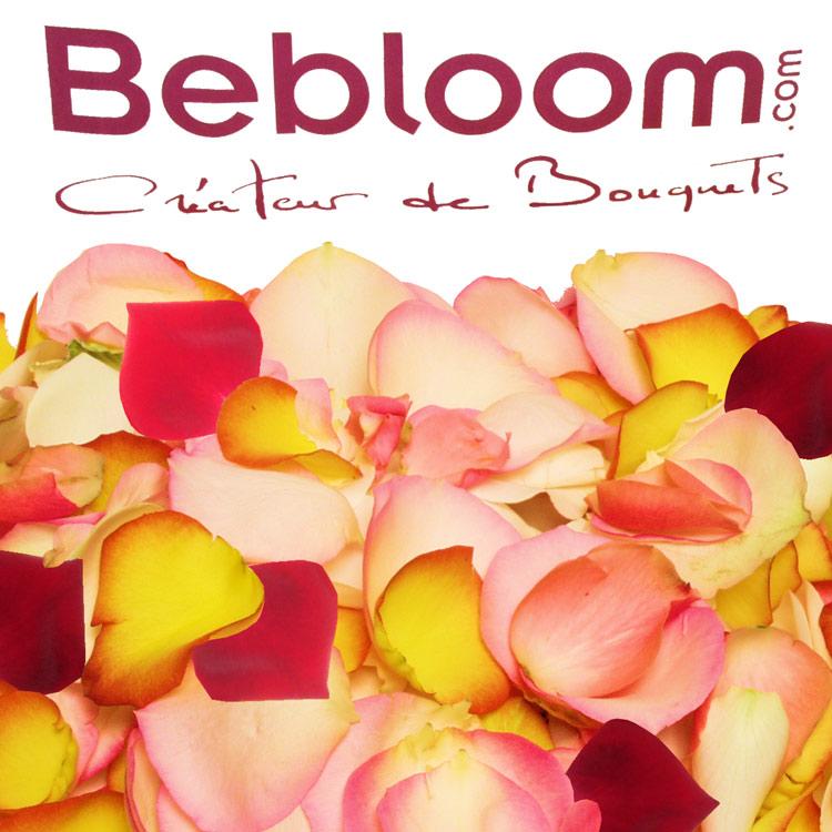 pluie-de-roses-200-544.jpg