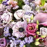 purple-love-200-3912.jpg