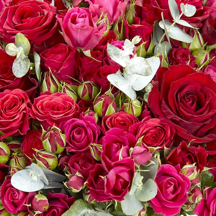 red-symphonie-xxl-200-3720.jpg