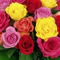 rosas-50-itf-200-1013.jpg
