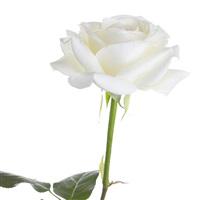rose-blanche-et-ses-amandes-gourmand-200-2484.jpg