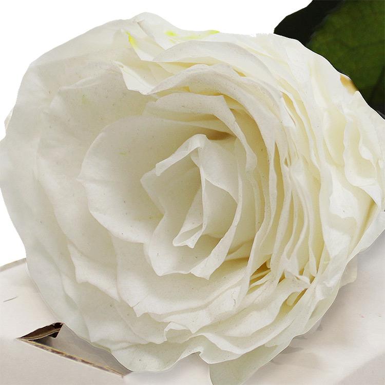 rose-blanche-stabilisee-200-1340.jpg
