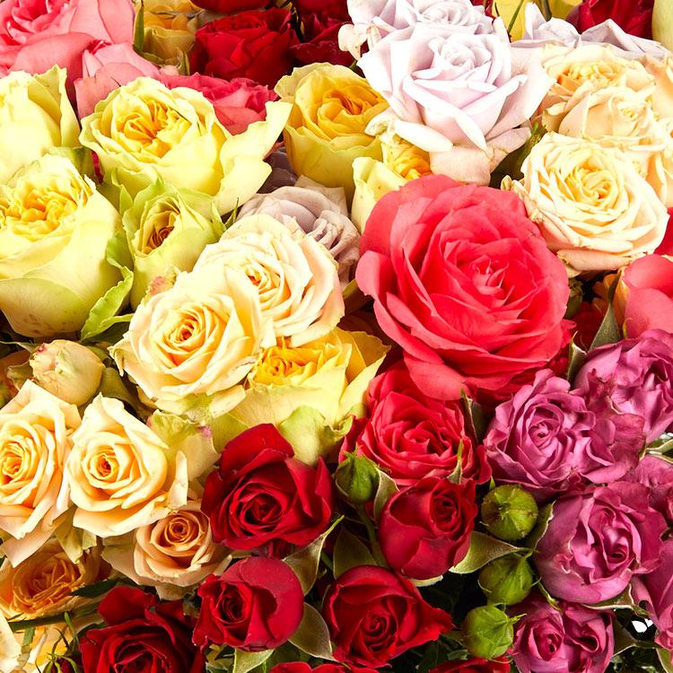 rose-explosion-et-son-vase-200-4727.jpg