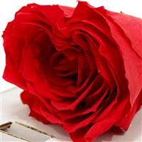 rose-rouge-stabilisee-200-1338.jpg