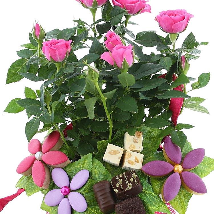 rosier-gourmand-200-2409.jpg