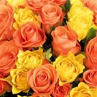 safran-40-roses-200-1655.jpg