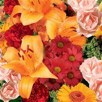 supreme-orange-200-1611.jpg