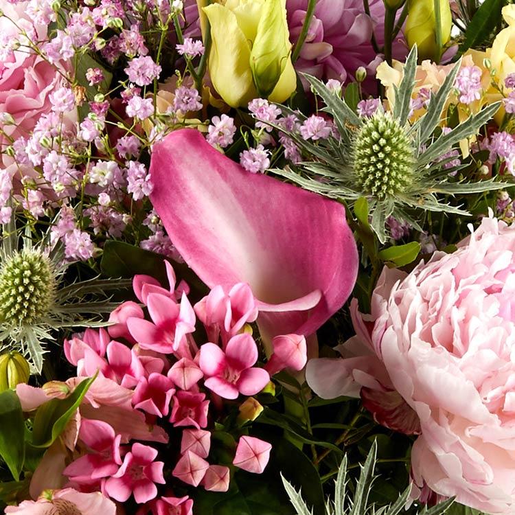 sweety-pink-xxl-et-son-rose-lafage-750-4694.jpg