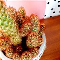 trio-de-cactus-200-7203.jpg