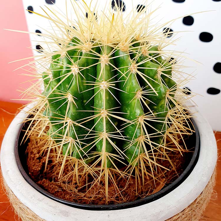 trio-de-cactus-750-7204.jpg