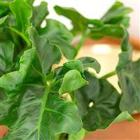 trio-de-plantes-vertes-200-5211.jpg