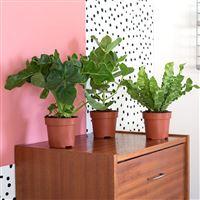 trio-de-plantes-vertes-200-5212.jpg