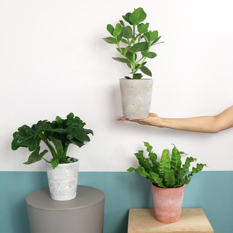trio-de-plantes-vertes-et-leur-cache-750-5416.jpg