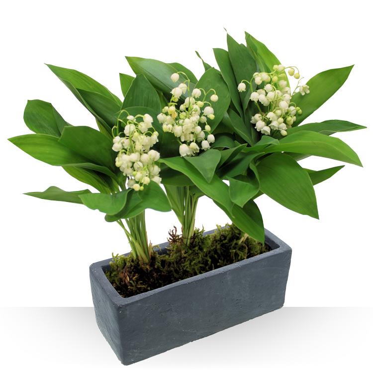 livraison de plantes vertes et plantes fleuries. Black Bedroom Furniture Sets. Home Design Ideas