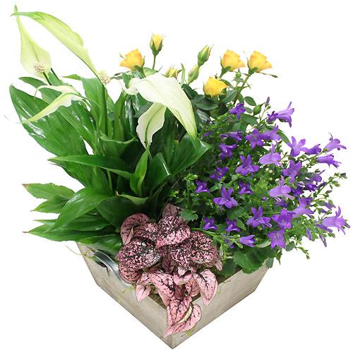 Plantes jardini re fleurie for Fleurs et cadeaux