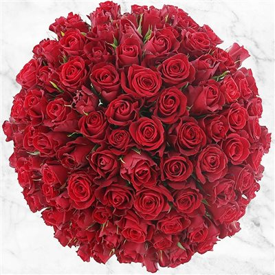 101 roses rouges - bebloom