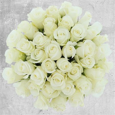 40 roses blanches - bebloom