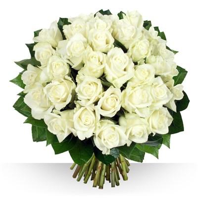 40 roses Platine - bebloom