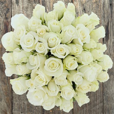 50 roses blanches - bebloom
