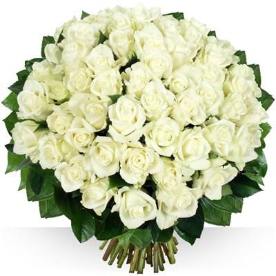 60 roses Platine - bebloom