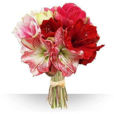 Cadeau saint valentin id es de cadeau bonnes affaires for Fleurs amaryllis bouquet