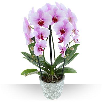 Arcade d'Orchidées