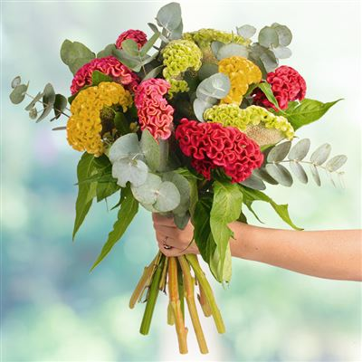 Bouquet de célosies multicolores XL - bebloom