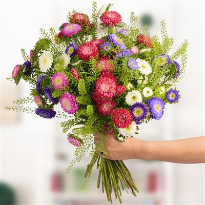Bouquet de reines-marguerites multicolores