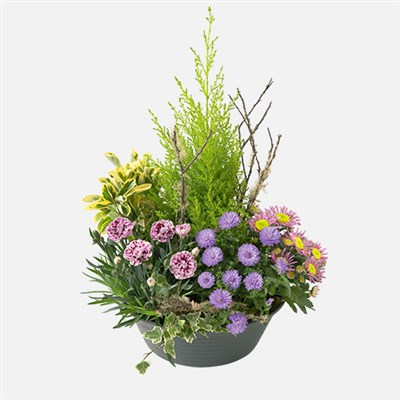 COUPE DE PLANTES - bebloom