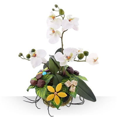 Design d'orchidée gourmande