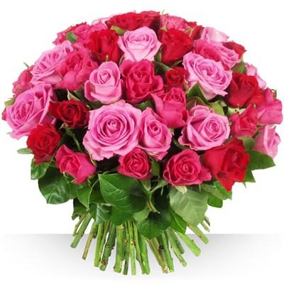 60 roses Camaïeu - bebloom