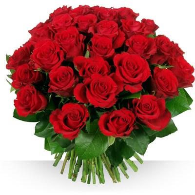 50 roses Garance