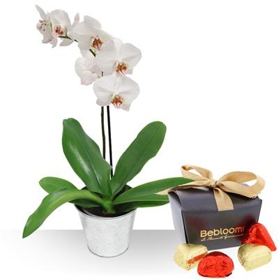 Orchidée et ses chocolats - bebloom