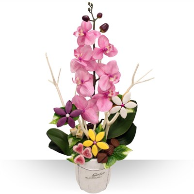 Orchid�e gourmande XL