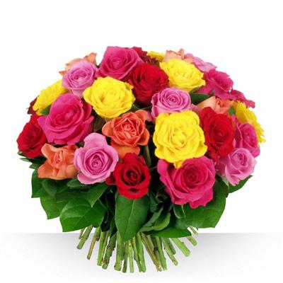 40 Roses - bebloom