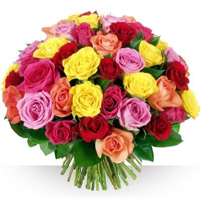 60 Roses - bebloom
