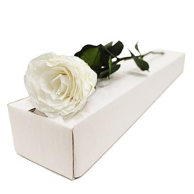 Rose éternelle blanche - bebloom