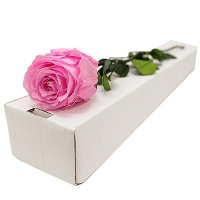 mur vgtal rose ternelle rose. Black Bedroom Furniture Sets. Home Design Ideas