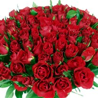 101-roses-rouges-200-593.jpg